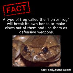 That's one determined little sucker Love Facts, Fun Facts, Random Facts, Creepy Facts, Strange Facts, Creepy Things, Creepy Stuff, Types Of Frogs, Monster Under The Bed