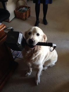 Kneel before Labrathor unworthy hooman..