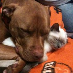 My babies <3 #pitties and kitties