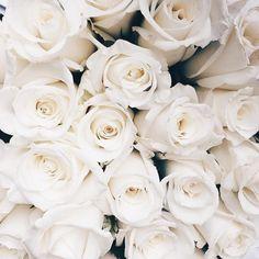 "Tessa Lindsay Garcia on Instagram: ""Saturday blooms c/o @dangarciac"""