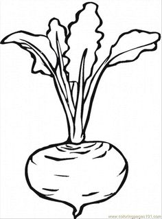 Beetroot 7 coloring page from Beets category. Select from 26736 printable crafts of cartoons, nature, animals, Bible and many more. Vegetable Coloring Pages, Fruit Coloring Pages, Colouring Pages, Coloring Books, Art Drawings For Kids, Colorful Drawings, Drawing For Kids, Easy Drawings, Super Coloring Pages