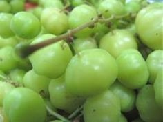 Phyllantus acidus (♥♥)  Gooseberry Karamay or bangkiling as it called in the Philippines is use in some Filipino dishes as a souring agent. This f...