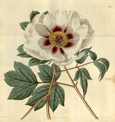 New Vintage Flowers Illustration Botanical Prints Canvases Ideas