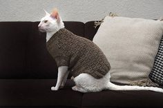 Handmade brown sweater for sphynx cat with squares patern