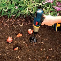 Gartenpflanzen Spiral-Bohrer – Tiraloshop Planting Grass, Planting Tulips, Garden Trowel, Garden Tools, Garden Paths, Flower Planters, Planter Pots, Digging Holes, Gardens