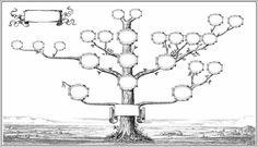 drzewo genealogiczne, drzewo rodowe