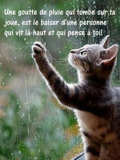Distance Quotes : QUOTATION - Image : Quotes Of the day - Description Goutte de pluie Sharing is Caring - Don't forget to share this quote ! French Words, French Quotes, Zen Quotes, Daily Quotes, Tu Me Manques, Quote Citation, Spiritual Thoughts, Bad Mood, Funny Facts