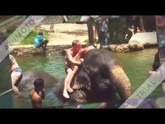 Diashow - Elefanten Baden im ethischen Elephant Park Phang Nga - Thailand Parks, Elephant Park, Thailand, Hotels, Khao Lak, Strand, Animals, Elephants, Tours