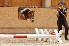Mini horse jumping I believe I can fly (credit to SARKA VEINHAUEROVA)