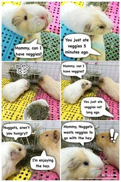 Oh Smoothie | | My Guinea Pig Facebook