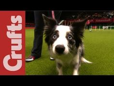 Funniest Moments from Crufts 2012 @Tina Doshi Wallis