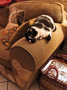 Fix For A Cat Scratched Couch Home Inspiration Tips