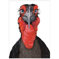 Southern Ground Hornbill by Lucy Reynolds.  #Hornbill #Bird #Nature #Wildlife #NaturalHistroy #Illustration #Painting #Gouache #Print #Red #Black #Folksy