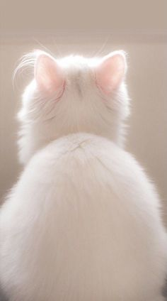 Cats Wallpapers ✧ Animals And Pets, Cute Animals, Puppy Coats, Cat Wallpaper, Aesthetic Colors, Wonders Of The World, Savannah Chat, Cute Cats, Fur Babies
