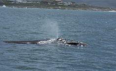 Kleinbaai – Die Welt der Riesen schützen Island Cruises, Animals, World, Animales, Animaux, Animal Memes, Animal, Animais, Dieren