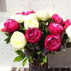 Beautiful mixed single stem peony flowers