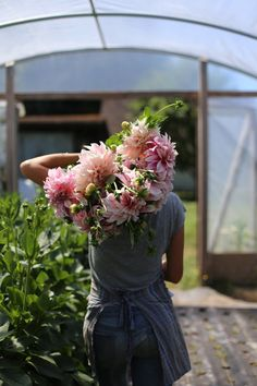 Cafe au Lait dahlias at Floret Flower Farm