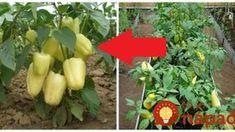 Dream Garden, Celery, Diy And Crafts, Gardening, Stuffed Peppers, Vegetables, Outdoor Decor, Plants, Food