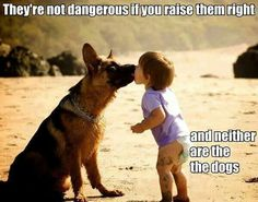 Pet owners responsibilities!
