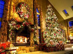 Google Image Result for http://images5.fanpop.com/image/photos/27500000/Have-A-Magical-Christmas-Berni-yorkshire_rose-27551472-1024-768.jpg