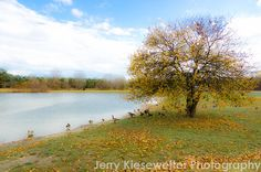 Canada #Geese Fall Photograph Bird by JKiesewetterPhotos on Etsy - $20.00