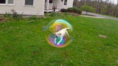 狗 肥皂泡 错觉