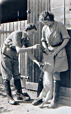 Women's Land Army, spoon-feeding a piglet.