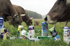 Billige Milch - Wer zahlt für die kleinen Preise?