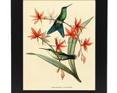 Vintage Natural History Brown Hummingbird on Flame Colored Trumpet Flowers Art Print From An 1885 French Natural History Publication (5). $10.00, via Etsy.