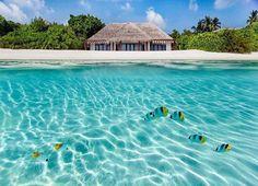 Underwater View, Maldives