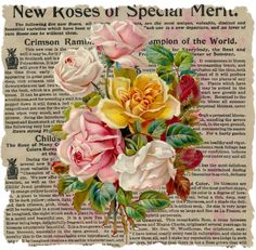 roses on old print