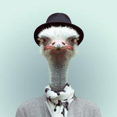 #Ostrich... but #elegant! ;)