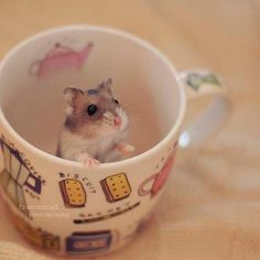 Hamster in a cup♡