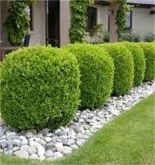 images of landscaping with lavender - Google Search
