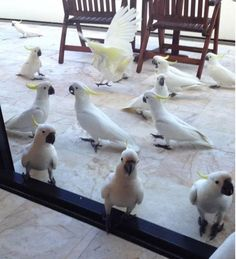 I would freak out if I found this on my patio, and then I would go out and play with them all day. lol