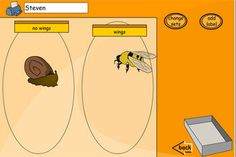Sort minibeasts into sets - choose number of sets and your own criteria