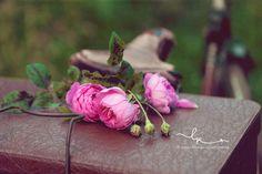 rosengelee_koffer_lillemor