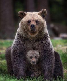 "beautiful-wildlife: ""Family Portrait by © Dmitry Arkhipov "" - Tiere - Chien Animals And Pets, Baby Animals, Funny Animals, Cute Animals, Strange Animals, Nature Animals, Interesting Animals, Love Bear, Big Bear"