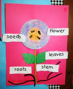 activity to do after reading The Tiny Seed by Eric Carle