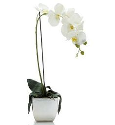 Orchid- My favorite flower