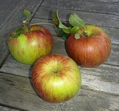Apples from my garden!