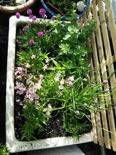 Spring Belfast sink. Belfast Sink Planter, Belfast Sink Garden, Garden Sink, Herbs Garden, Little Gardens, Small Gardens, Outdoor Gardens, Garden Inspiration, Garden Ideas