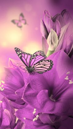 Primula Purple Butterfly iPhone 6 wallpaper