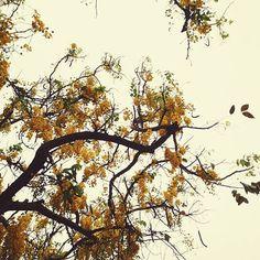 Parece até uma manhã de outono... Quando a gente anda olhando pro alto, além de topar o dedão do pé, também vemos coisas bonitas demais! #ficaadica  #acordabonita #slowbeauty #slowliving #igerses