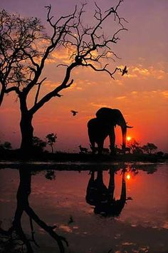 Beautiful sunset with Elephant, Botswana