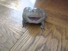 WATCH: He Touches A Frog He Found Inside His House, But No One Expected This To Happen. [MOBILE VIDEO]