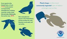 Did you know that more than 200 marine species worldwide are impacted by entanglement? The NOAA Marine Debris Program has released two state of the science reports on marine debris entanglement and ingestion. Click to read the reports in full here.