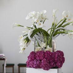 Corflor | Fuchsia