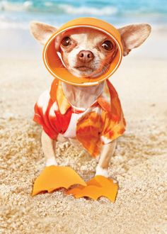 Happy Summer! Tell us what beaches you like to visit that are dog friendly @AnimalBehaviorC