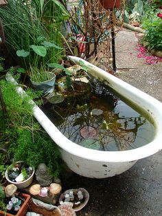 Old tub waterlily pond